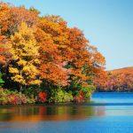 英語でなんて言う?「紅葉」【#6 日常英語】動物、植物